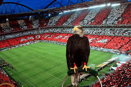 Бенфика - АЗ Алкмар: прогноз на матч. Прогнозы на Лигу Европы